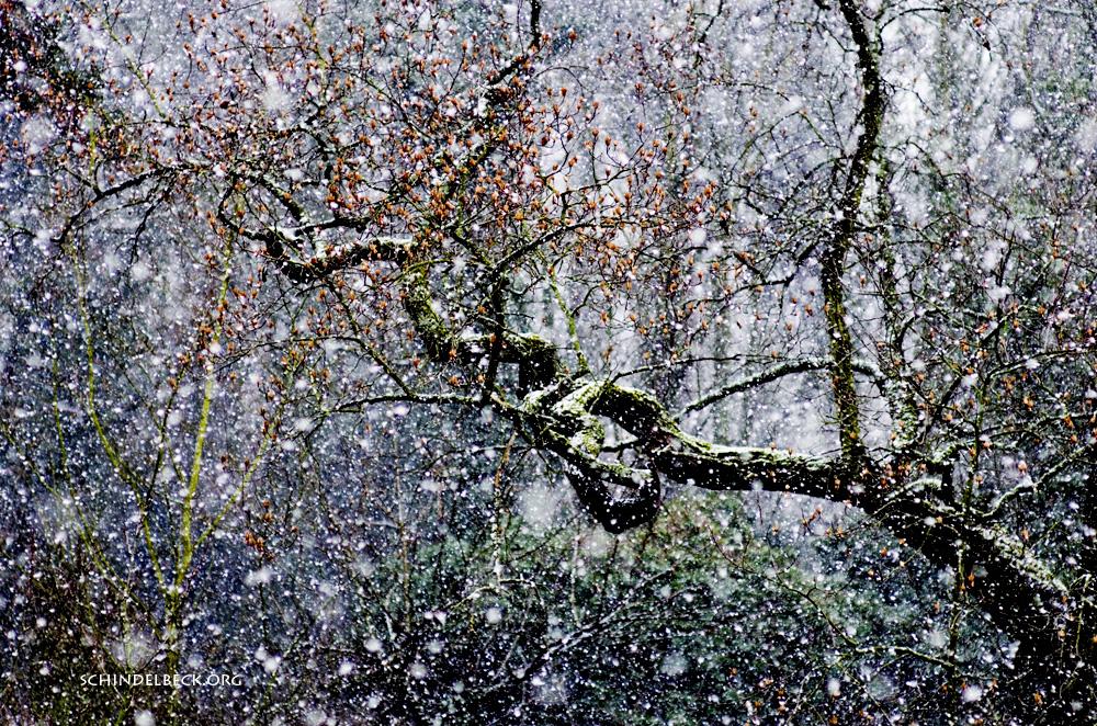 Winter Heidelberg - Photo Schindelbeck