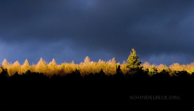 Himmel und Wald - Photo Schindelbeck