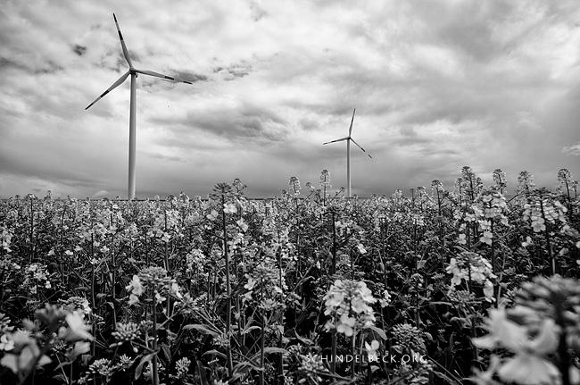 Landschaft mit Windrädern - Photo Schindelbeck