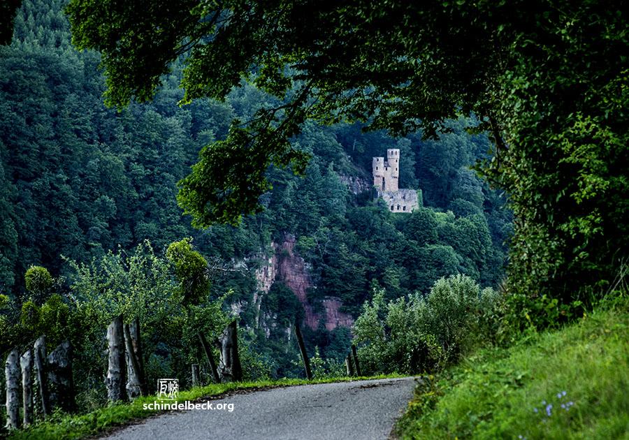 Foto Burg Schwalbennest in Neckarsteinach